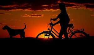 Sunset with dog and person on bike